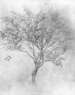 Study Of A Lemon Tree